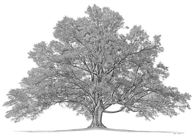 Family-Tree_640
