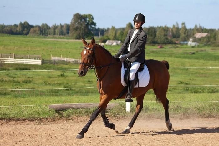 Eimantas Katkevičius teigia, kad žirgai yra jo hobis, aistra, gyvenimo tikslas ir prasmė.