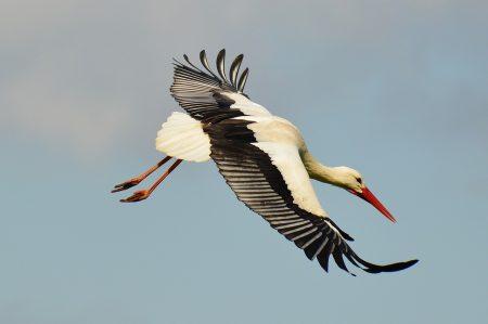 stork-1328086_1280